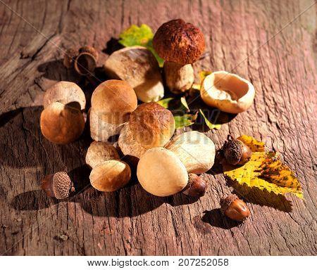 Oak Mushrooms, Acorns And Oak Leaves Over Wooden Background