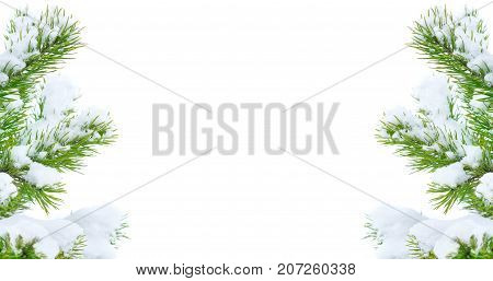 Snow-covered pine branch isolated on white background