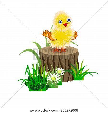 Funny yellow baby chick on a stub in grass. Vector illustration isolated on white background