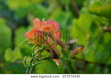 Beautiful flowers of colors orange. The nature is magnificent.