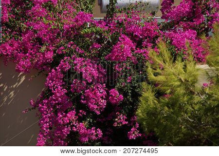 Explosions of beautiful flowers, with deep colors.