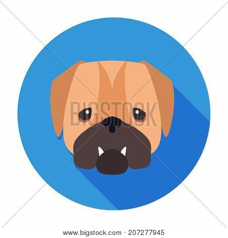 Wailful muzzle of English bulldog drawn icon on blue circle background. Vector illustration of shorthaired breed of dogs. Two fangs sticking out of closed canine mouth. Hand drawing graphic design.