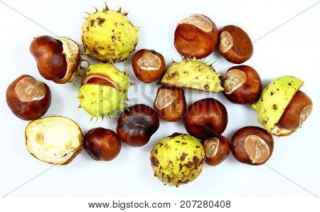 Chestnuts that have fallen from the tree on a white background