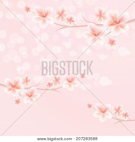 Flowers background. Flowers design. Vector abstract illustration. Sakura blossoms. Branches of sakura with flowers. Cherry blossom branch on pink. Vector EPS 10 cmyk