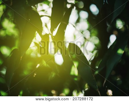 View through tree leaves - design postcard of defocused leaves with blur sun flare