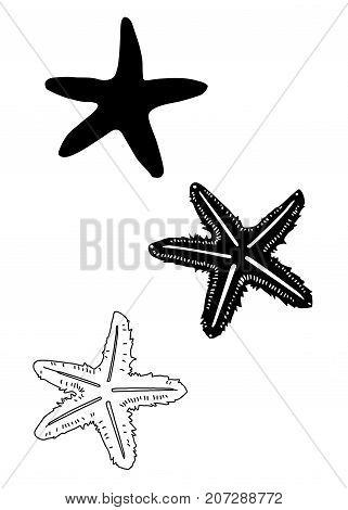 starfish vector art, starfish vector silhouette clip art
