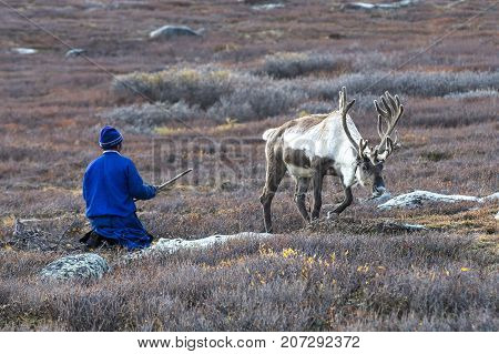 nomad man with his reindeer in northern Mongolia