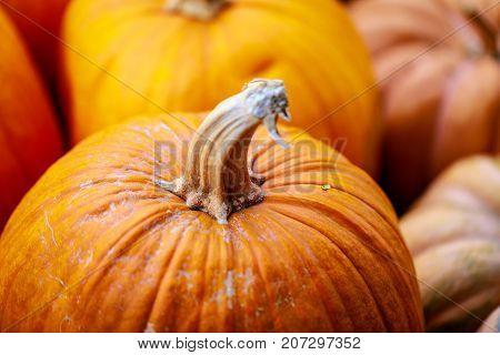 Assorted orange pumpkins squash with stalk with blurred background