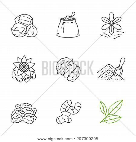 Spices linear icons set. Thin line contour symbols. Hazelnut, spices bag, saffron, sunflower seeds, walnut, bulk spices, dried goji berries, ginger, bay leaves. Isolated vector outline illustrations