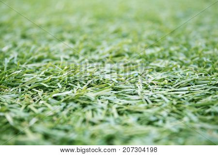 Closeup of artificial synthetic grass background, texture