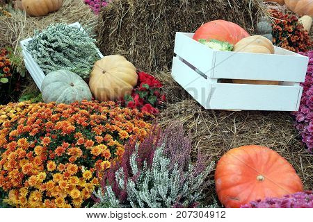 Beautiful colorful fair still life with lot of flowers and autumn vegetables in wooden boxes on hay