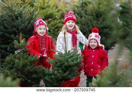 Kids Selecting Christmas Tree. Xmas Gifts Shopping.