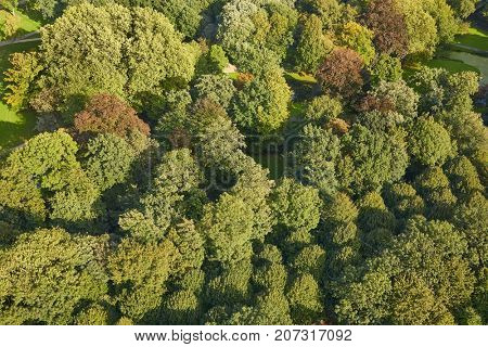 Park from bird's eye view, green canopy