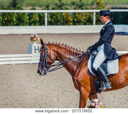Young elegant rider woman and sorrel horse. Beautiful girl at advanced dressage test on equestrian competition. Professional female horse rider, equine theme. Saddle, bridle, boots and other details.