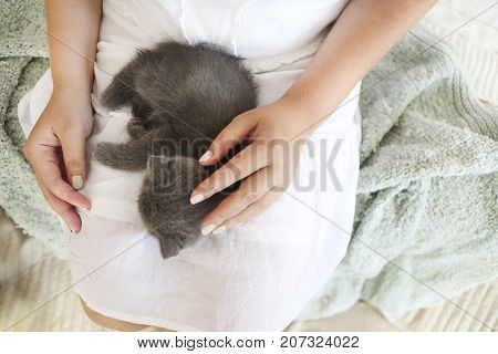 British kitten slepping on young woman hands
