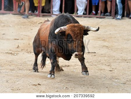 bull in spain with big antlers in landscape