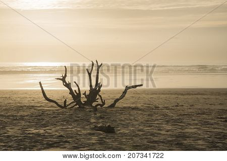 Sunset at the beach with a tree snag in front of the beach.
