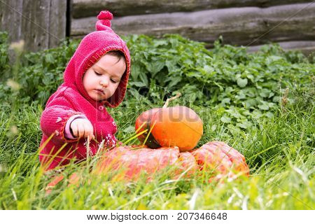 a small serious child in a purple gnome suit sits on a floor of a turn with two pumpkins in the grass and looks down. There is a free place for the inscription halloween. Farm wooden wall.