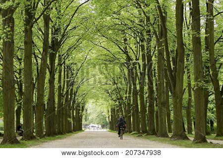 Alley In Park Of Esterhazy Castle In Feroed, Hungary