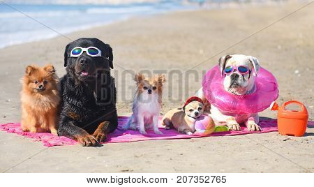 group of dogs laid down on the beach