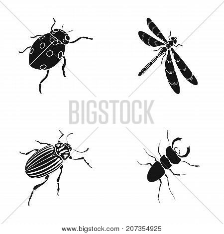 Arthropods Insect ladybird, dragonfly, beetle, Colorado beetle Insects set collection icons in black style vector symbol stock isometric illustration .