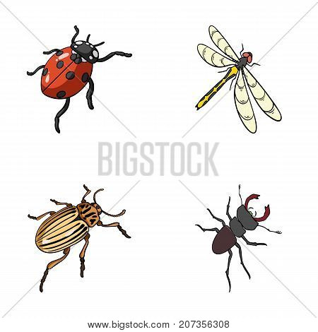 Arthropods Insect ladybird, dragonfly, beetle, Colorado beetle Insects set collection icons in cartoon style vector symbol stock isometric illustration .