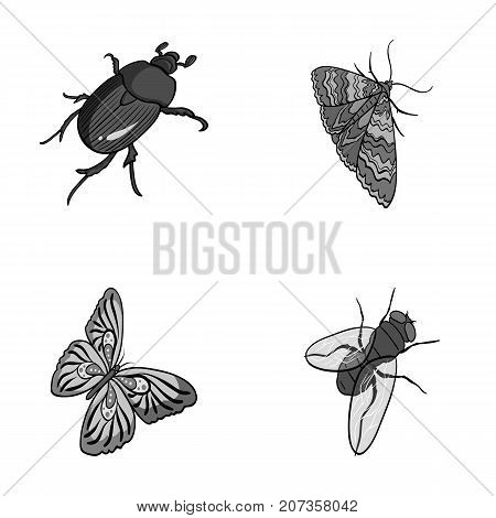 Arthropods insect beetle, moth, butterfly, fly. Insects set collection icons in monochrome style vector symbol stock isometric illustration .