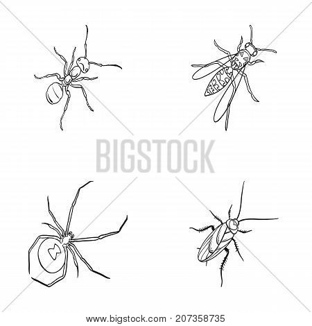 An insect arthropod, an osa, a spider, a cockroach. Insects set collection icons in outline style vector symbol stock isometric illustration .