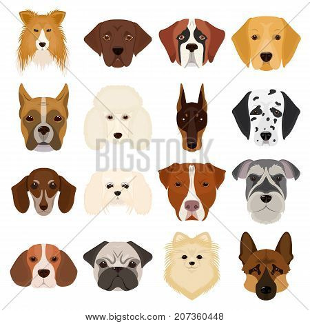 Doberman, Dalmatian, Dachshund, Spitz, Stafford and other breeds of dogs.Muzzle of the breed of dogs set collection icons in cartoon style vector symbol stock illustration .