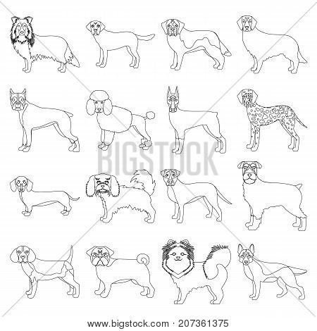 Dog, pooch, breed, and other  icon in outline style.Dalmatian, shepherd, terrier, icons in set collection.