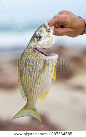Catching Fresh Fish