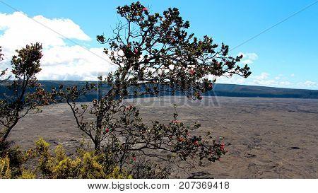 Kilaeua Volcano Caldera Hawaii, Barren crater with living nature.