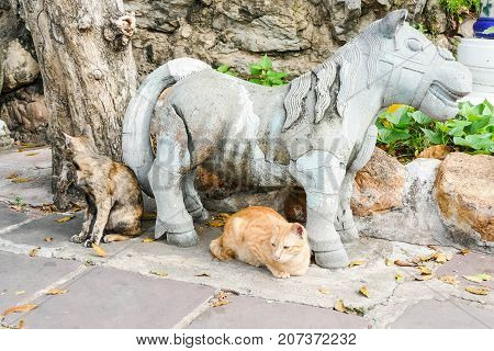 The homeless cat lives in a temple in Thailand. Stray cat remains a still unresolved problem in Thailand.