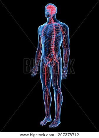 3d rendered medically accurate illustration of the nervous system