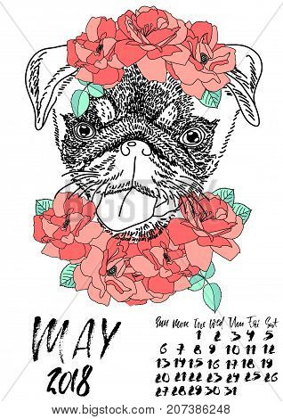 Calendar with dry brush lettering. May 2018. Dog with wreath of red flowers and green leaves. Cute pug portrait. Vector illustration.