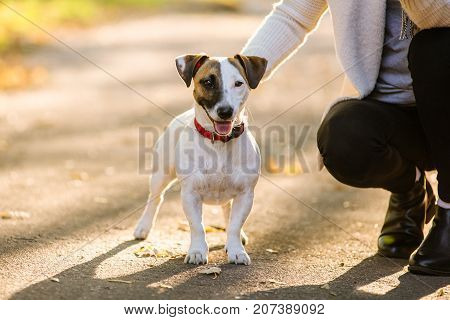 beautiful girl playing with a dog. Playing with the dog on the park. Close-up portrait. Jack Russell Terrier