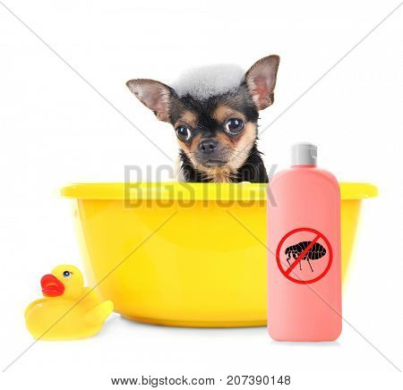 Puppy in basin and bottle of flea shampoo on white background