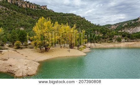 Long shot of poplar trees in yellow color near river bank