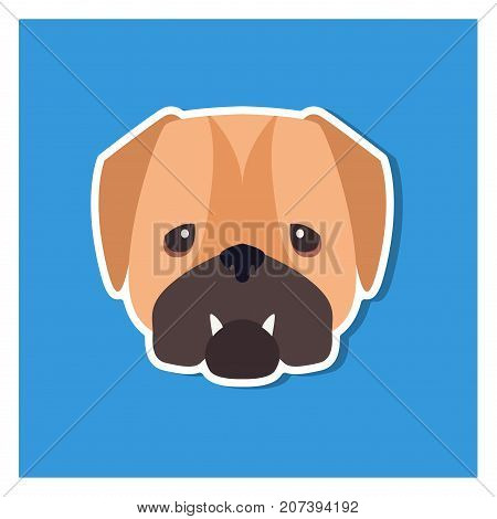 Dolorous muzzle of English bulldog drawn icon on blue background. Vector illustration of shorthaired breed of dogs. Two fangs sticking out of closed canine mouth. Hand drawing graphic design.