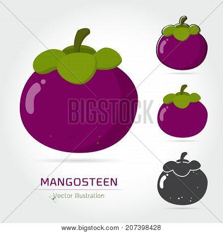 Mangosteen vector icon cartoon style isolated on white background. Mangosteen vector illustration. Mangosteen isolated black and color icons vector silhouette. Mangosteen fruit vector flat style
