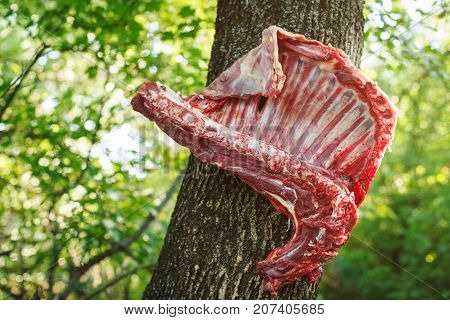 Meat of mutton weighs on a tree for preparation of pilaf. National food.