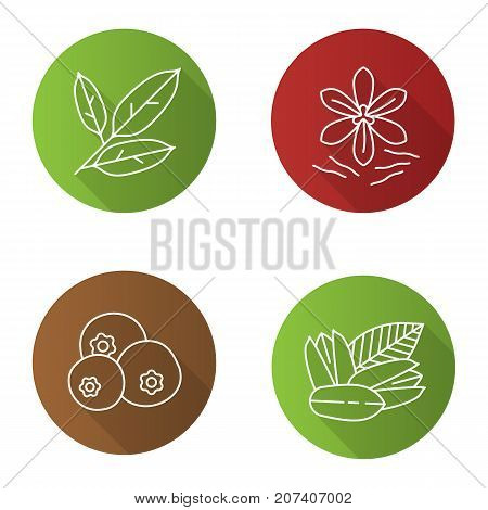 Spices flat linear long shadow icons set. Bay leaves, pistachio, allspice, saffron. Vector outline illustration