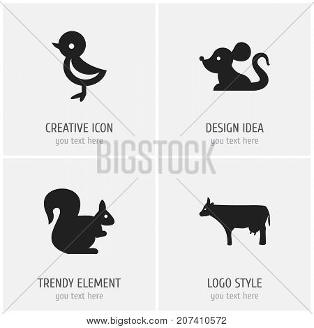 Set Of 4 Editable Zoology Icons. Includes Symbols Such As Kine, Bird, Rat And More