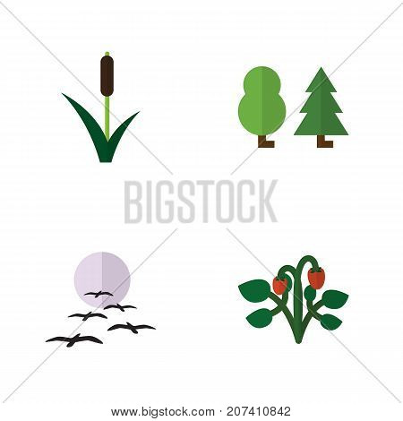 Flat Icon Natural Set Of Berry, Forest, Cattail And Other Vector Objects