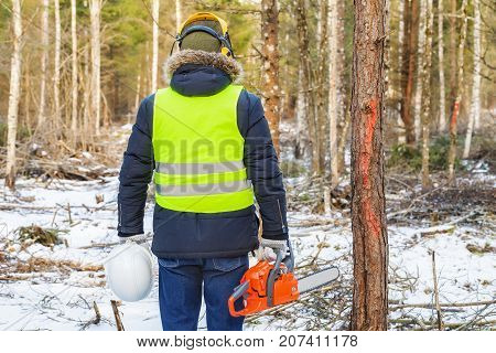 Lumberjack with chainsaw near marked trees in forest