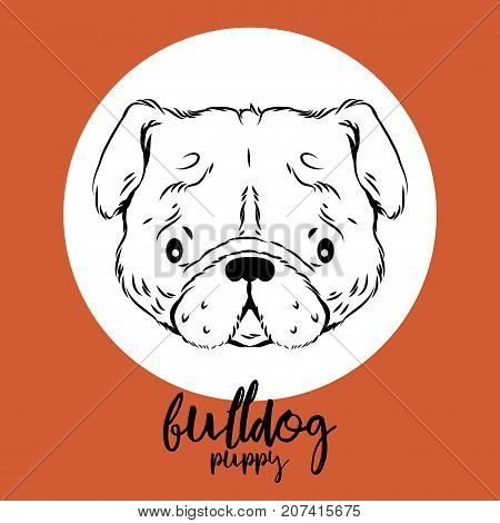 bulldog head isolated on white background. Vector illustration, design element for cards, banners, flyers.
