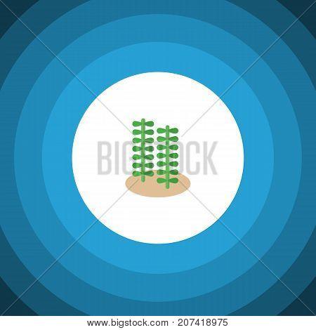 Seaweed Vector Element Can Be Used For Seaweed, Alga, Spirulina Design Concept.  Isolated Alga Flat Icon.
