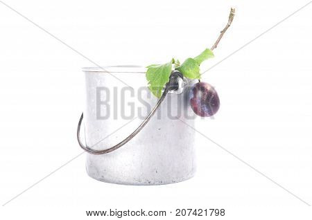 Tin Bucket With Twig And Plum