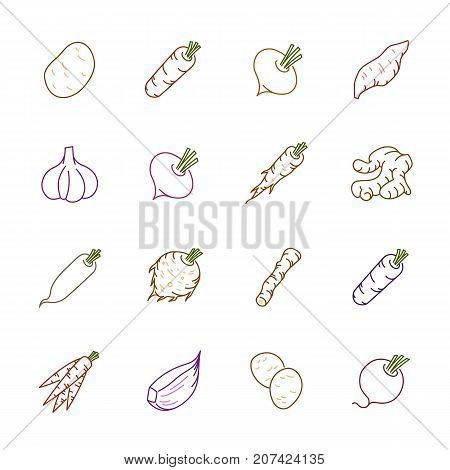 Vegetables icons. Vegetables vector illustration. Vegetables and seasoning in outline style. Vegetarian food signs. Professional vector icons for vegetables and spices.