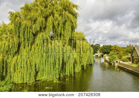 Willow tree on the river Greta Ouse at Godmanchester, a scenic village in cambridgeshire
